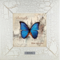 Blue morpho картина бабочки 18х18 см