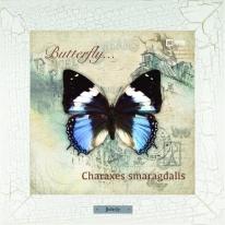 Charaxes smaragdalis картина бабочки 28х28 см