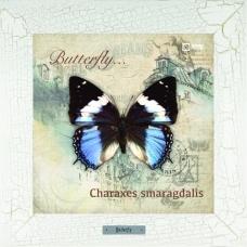Charaxes smaragdalis картина в деревянной рамке на керамике