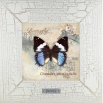 Charaxes smaragdalis картина бабочки 18х18 см