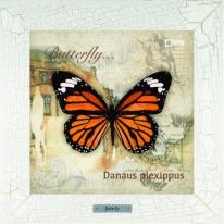 Danaus plexippus картина бабочки  28х28 см