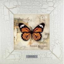Danaus plexippus картина бабочки 18х18 см