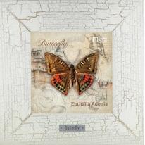 Euthalia Adonia картина бабочки 18х18 см