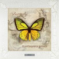Ornithoptera goliath картина бабочки  28х28 см