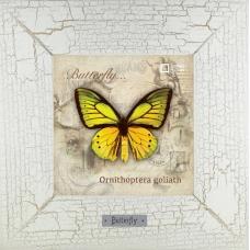 Ornithoptera goliath картина бабочки 18х18 см