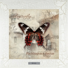 Pachlioptera Hector картина бабочки на керамике в деревянной рамке