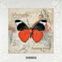Panacea Prola картина бабочки  28х28 см