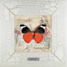 Panacea Prola картина бабочки 18х18 см