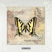 Papilio alexanor картина бабочки  28х28 см