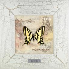 Картина Papilio alexanor на основании реального изображения