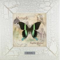 Papilio blumei картина бабочки 18х18 см