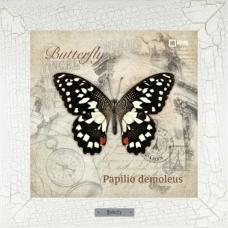 Papilio demoleus картина бабочки на керамике в деревянной рамке