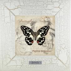 Papilio demoleus картина бабочки 18х18 см