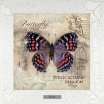 Precis octavia sesamus картина бабочки  28х28 см