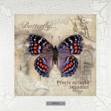 Precis octavia sesamus картина бабочки на керамике