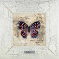 Precis octavia sesamus картина бабочки 18х18 см