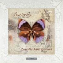 Zeuxidia Amethystinus картина бабочки  28х28 см