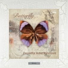 Zeuxidia Amethystinus картина бабочки на керамике в деревянной рамке