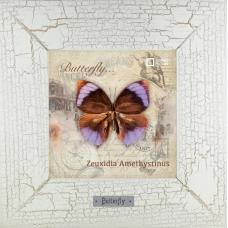 Zeuxidia Amethystinus картина бабочки 18х18 см